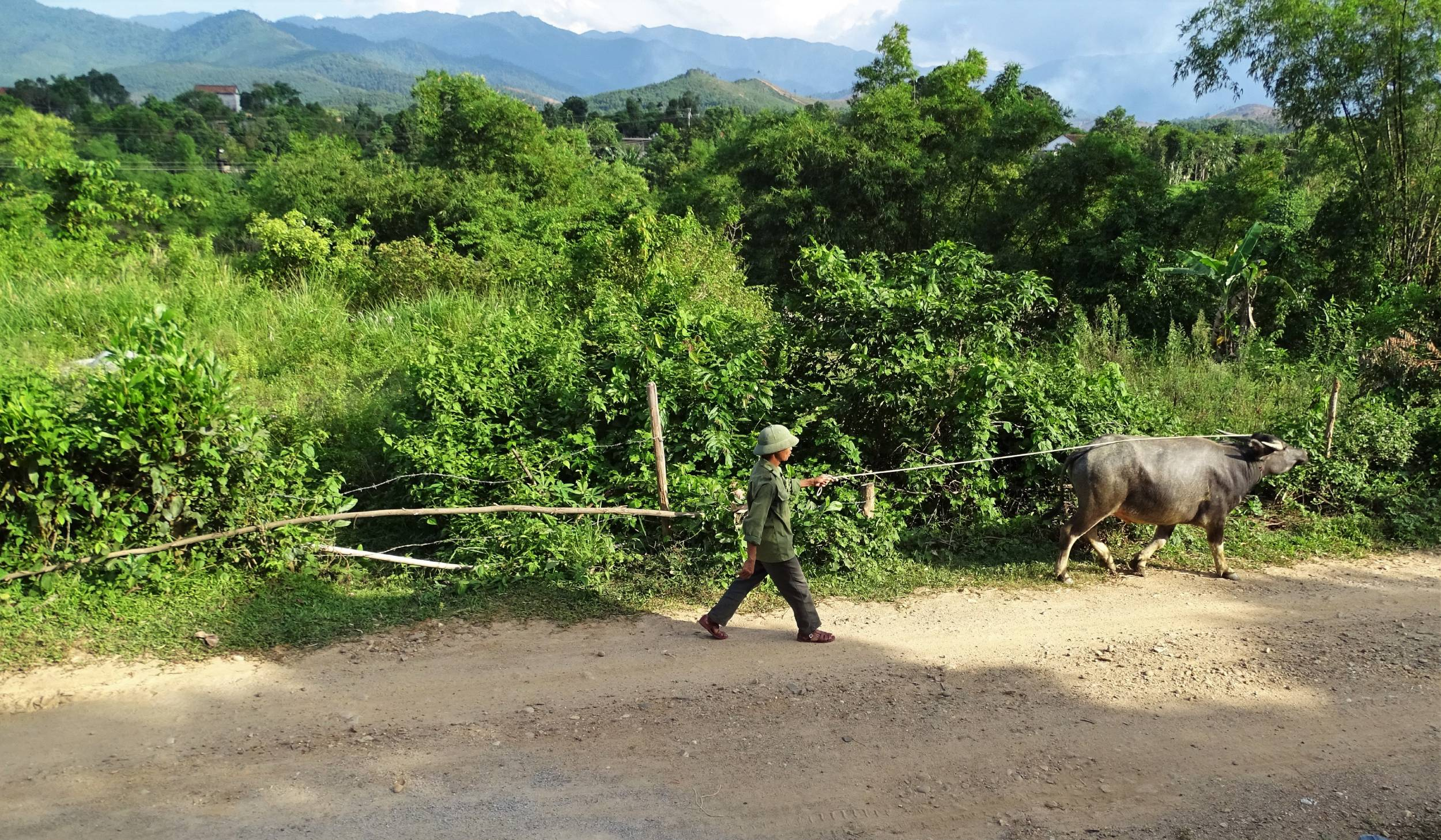Vietnamese villager walking on a dirt road with a buffalo on a string