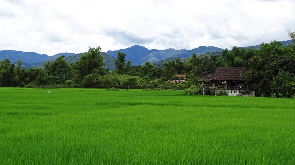 Landscape around Dien Bien Phu: verdant green paddy fields, traditional houses and forest-clad mountains in the background
