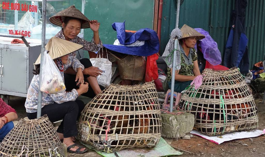 Elderly women in conical hats  selling live chicken held in bamboo cages. Fresh Market in Dien Bien Phu