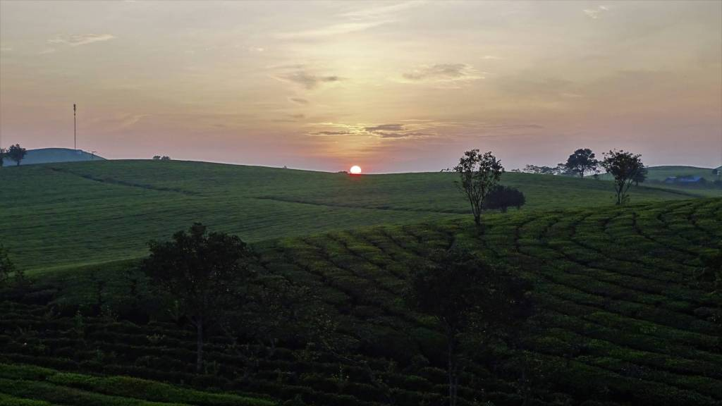 Sun rising over the hills covered with tea plantations