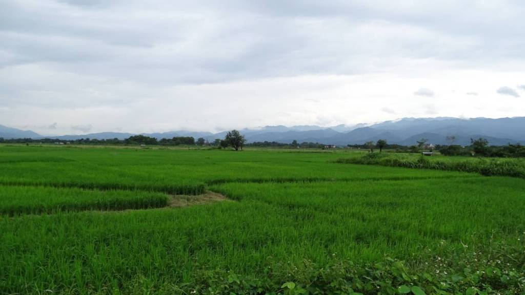 Paddy fields and the mountains in the distance. Muang Sing, Laos