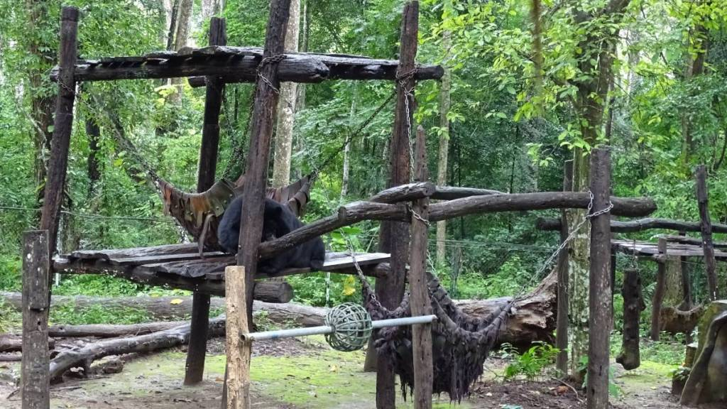 A wooden platform raised in the forest for the bears in the rescue centre in Laos. One small black bear is lying on the platform,