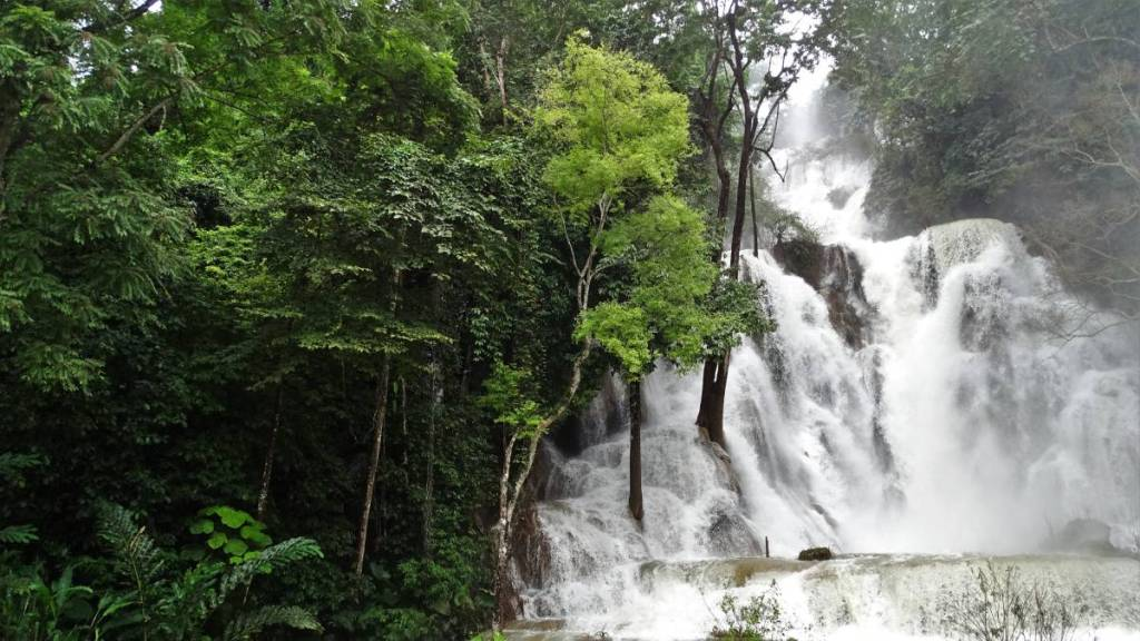 Powerful, multi-tiered Muang Si waterfall and a green wall of the jungle, with some huge trees partially under water