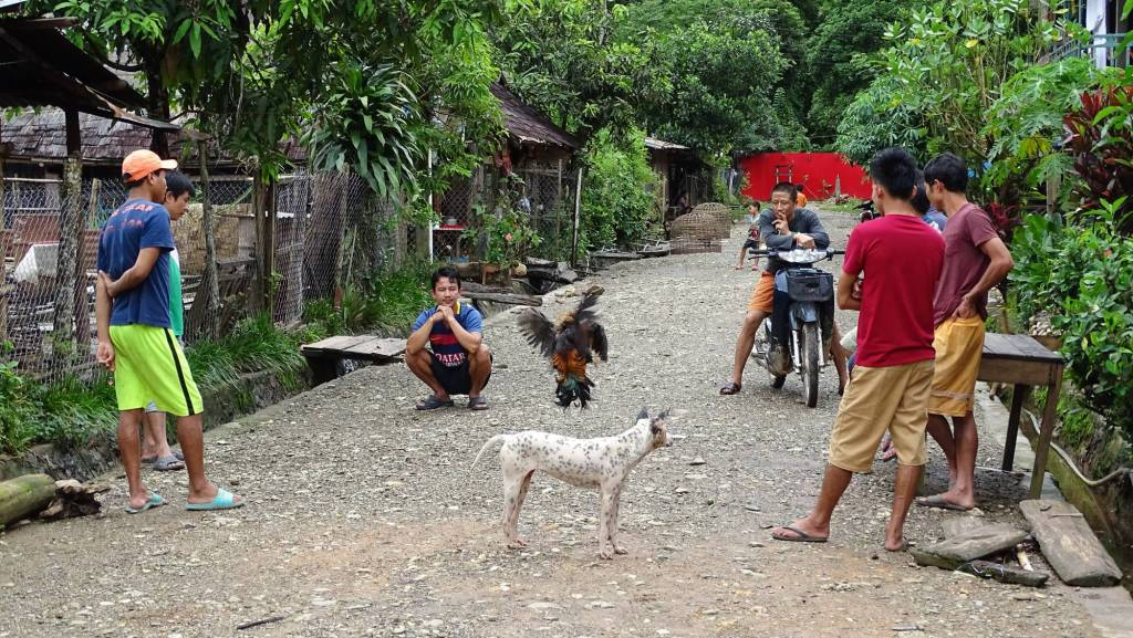 Street scene in Muang Ngoi: two cocks fighting while a dog, three standing and one squatting man watch by