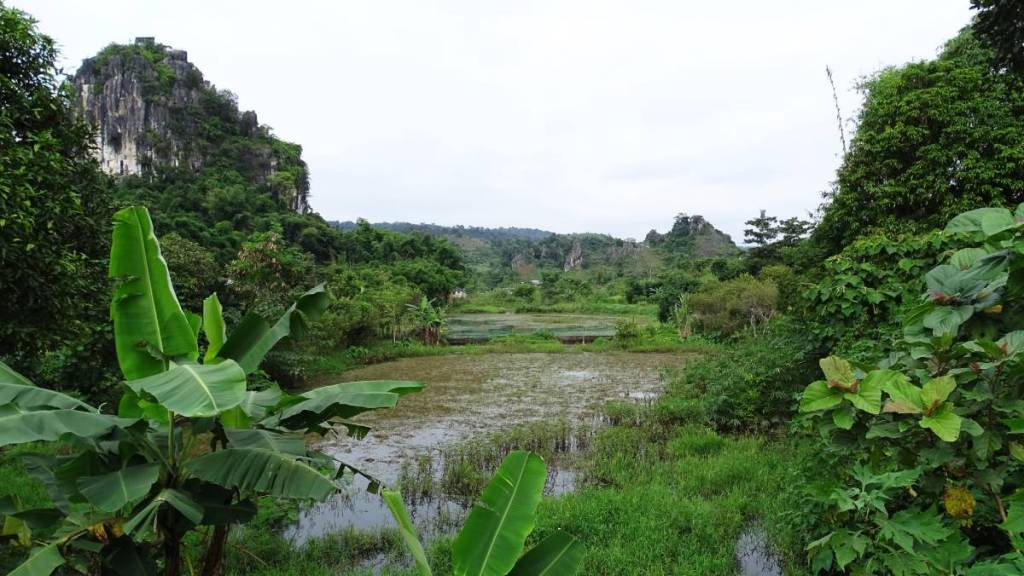 Green, wet landscape of Vieng Xai: white karst rocks covered with bushes, and ponds fringed with lush greenery
