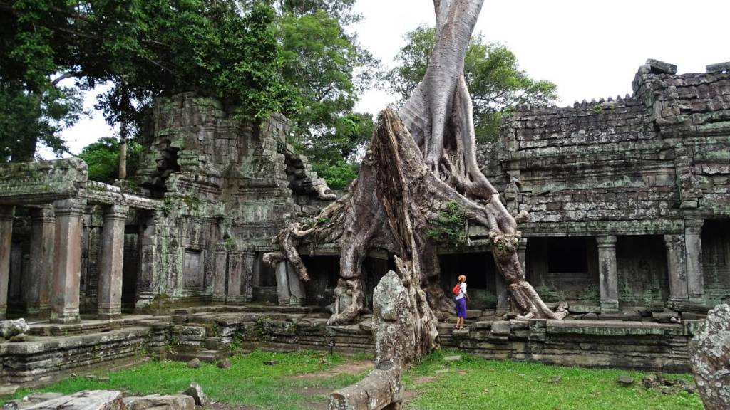 Walking under the roots of a giant tree which grew into the walls of temple in Angkor Wat complex
