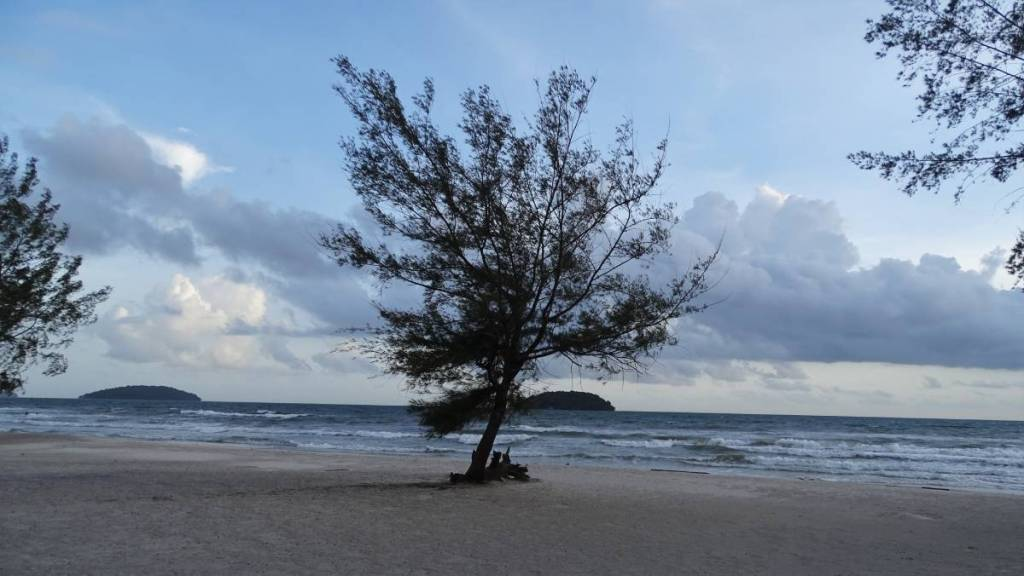 A small tree grows on the empty, sandy beach in Otres