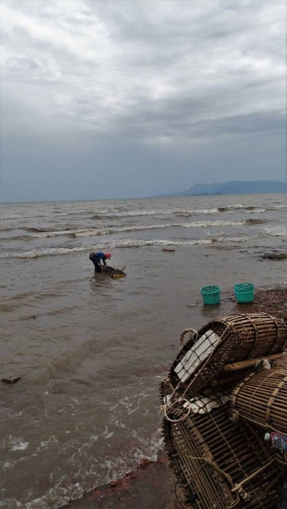 Woman in a hat picking up crabs from a cage submerged in the sea right next to the crab market in Kep