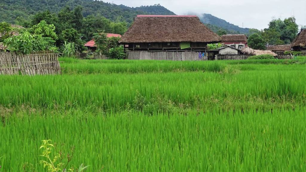 A bright green paddy field and thatched-roofed, wooden huts in Lam Dong village near Ha Giang