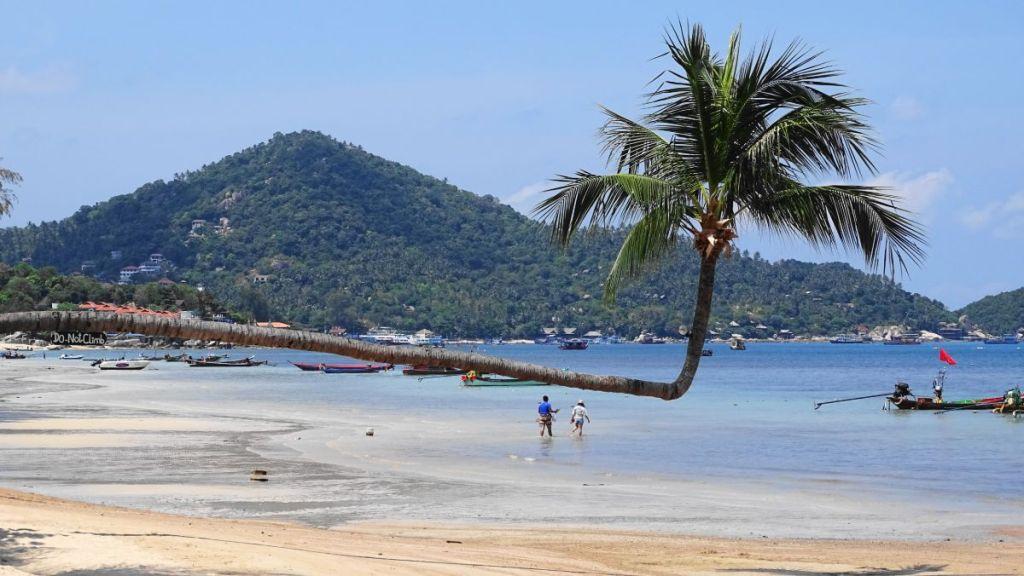 Landmark bent coconut tree Sairee beach, Koh Tao