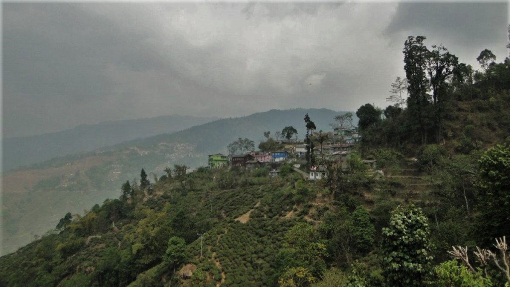 Mountain slopes covered with tea gardens in Darjeeling, India