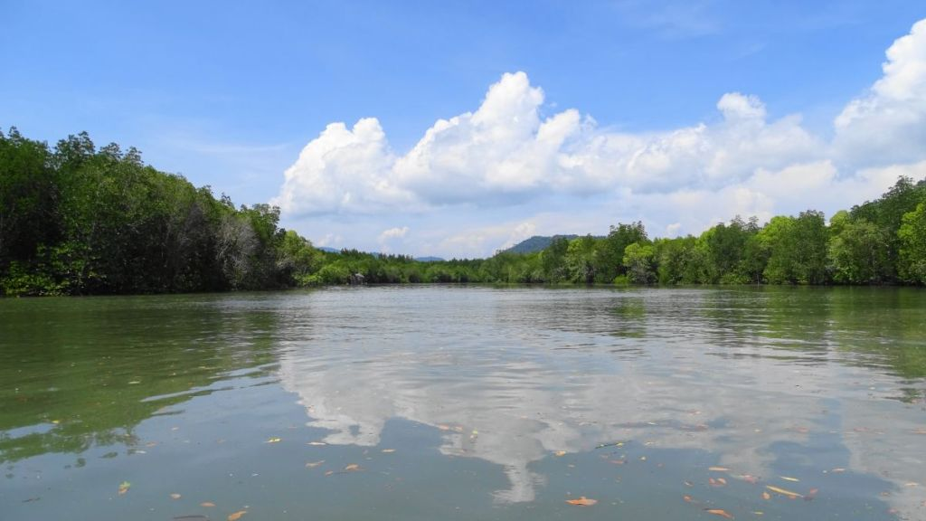 the mangrove forest from the kayak in koh lanta