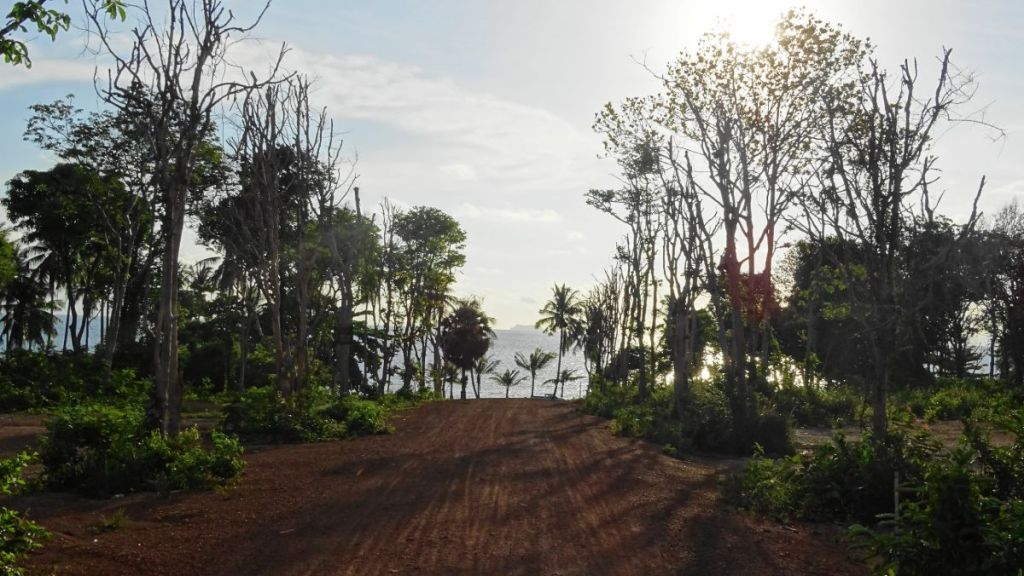 A dirt road with trees on both sides leading to the Secret Beach in Koh Lanta