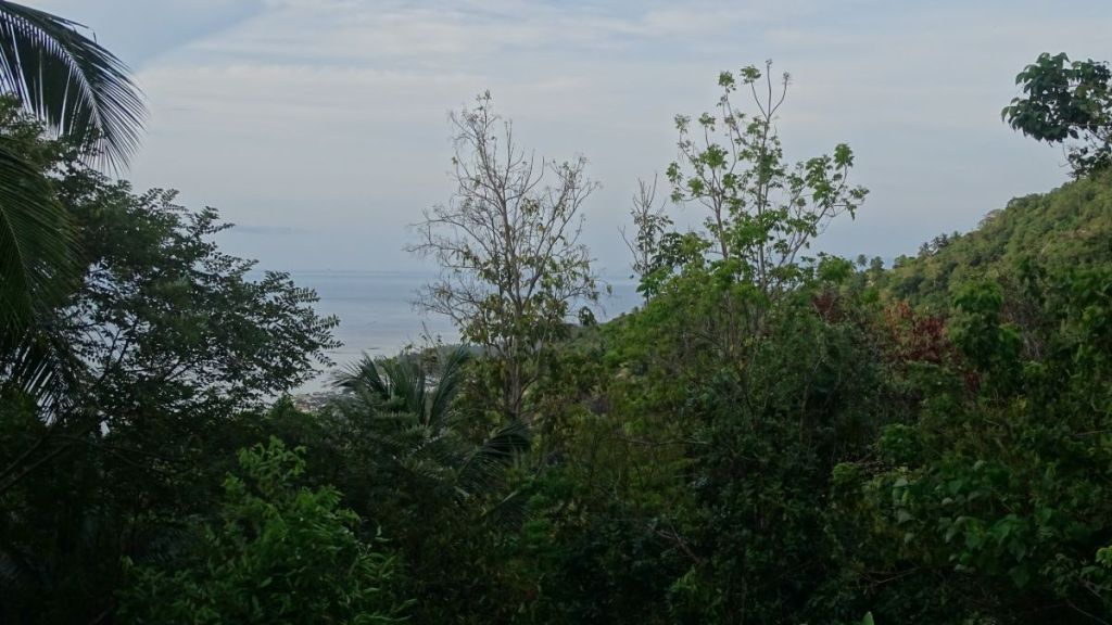 sea can be seen through the jungle from our meditation hall situated at top of the hill in Koh Samui