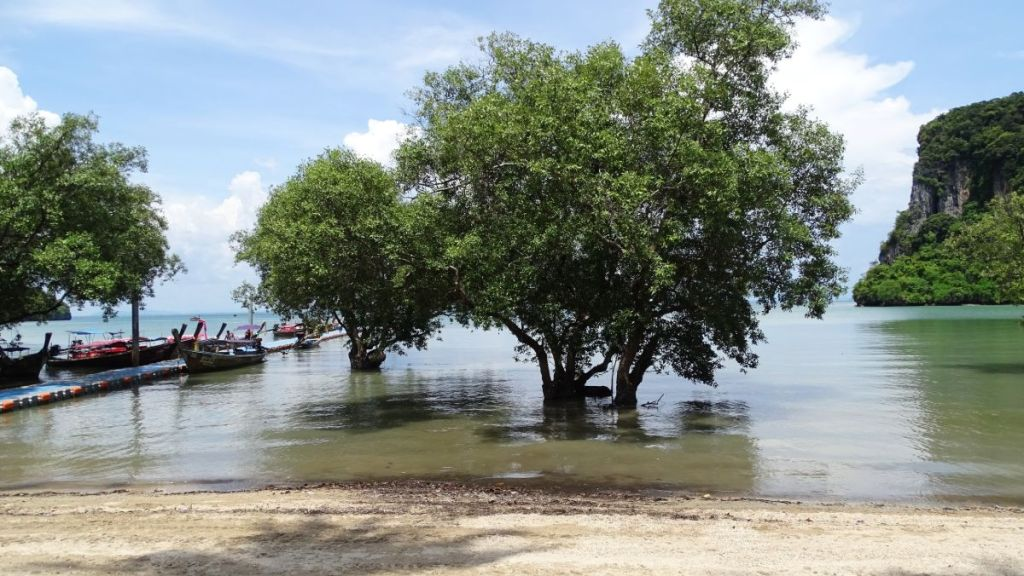 A few trees in the water with longtail boats at the pier on East Railay