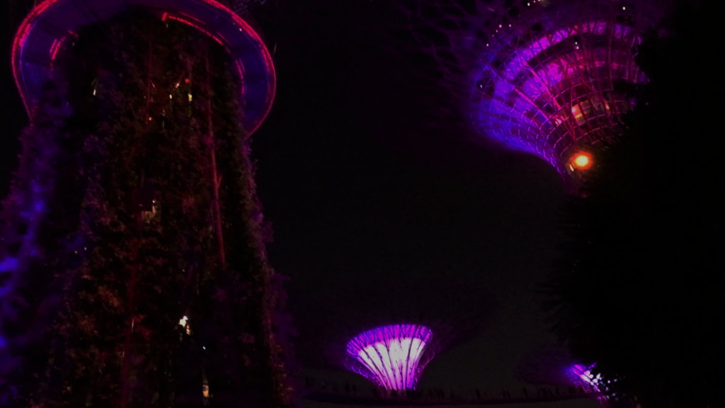 Super-trees: huge metal structures covered with living plants -lit purple during the light and sound show at the Gardens at the Bay