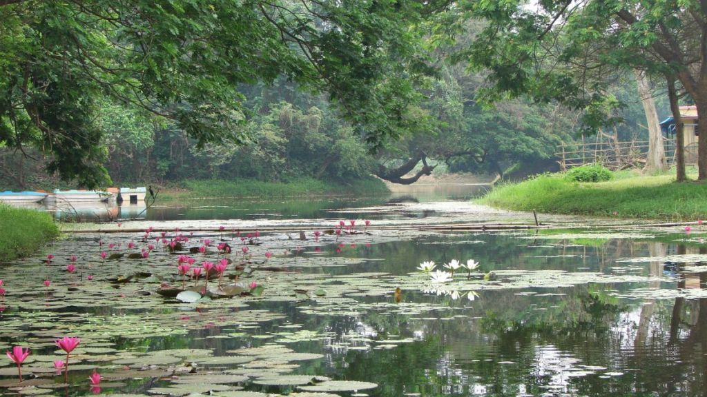 Pond with water lilies at Calcutta Botanic Garden