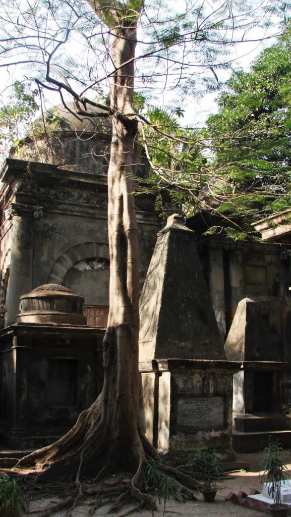 Large, poorly maintained tombstones of the British and the trees encroaching the space between them at the Park Street Cemetery in Kolkata