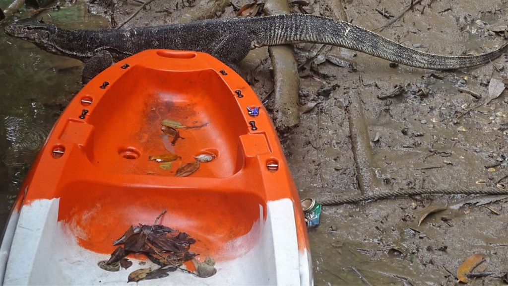 A monitor lizard in the mud, going towards water in front of an orange kayak in Krabi