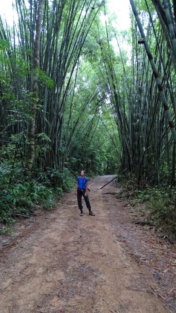 Weronika standing on a walking path inside Khao Sok National Park with bamboo trees on both side