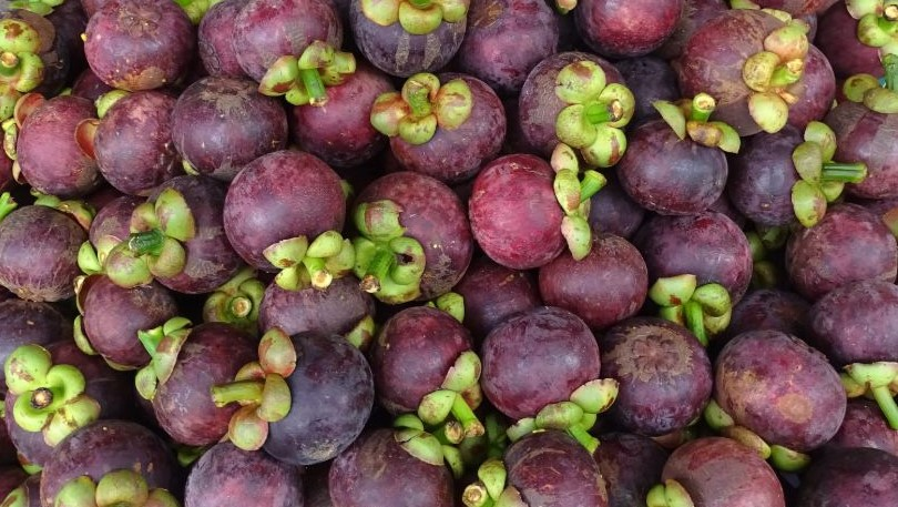 Stacked Mangosteen: violet coloured round shaped fruit from south east Asia