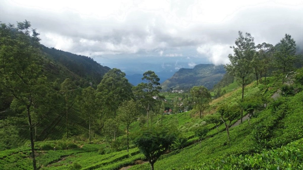 Slopes of the hills covered with tea platations and the view at the higher mountains in the background. On the way to Lipton's Seat in Sri Lanka