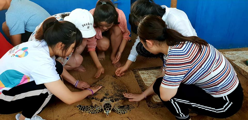 Five female Chinese volunteers pat a  sea turtle with sand at a hatchery in Balapitiya, Sri Lanka