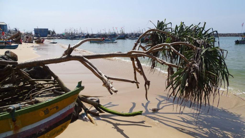 A row of sailboats, a strip of sand and a branch of a palm at a small harbour in Ambalangoda, Sri Lanka