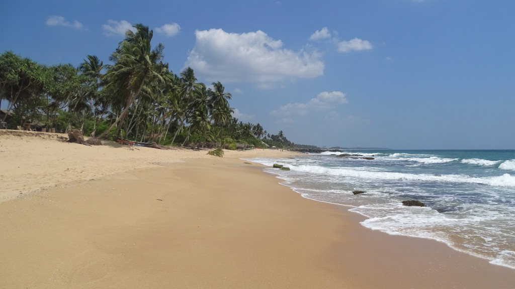 A narrow, long, sandy beach lined with palm trees and waves crashing the shore in Tangalle, Sri Lanka