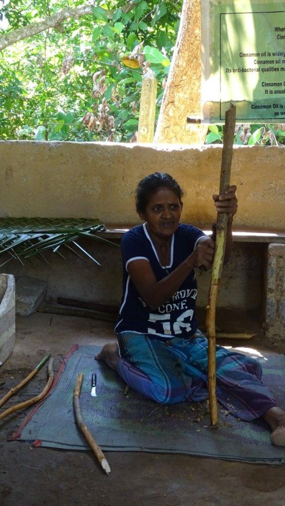 An elderly Sri Lankan lady demonstrates how to peel the cinnamon bark of a twig on Cinnamon Island in Balapitiya, Sri Lanka