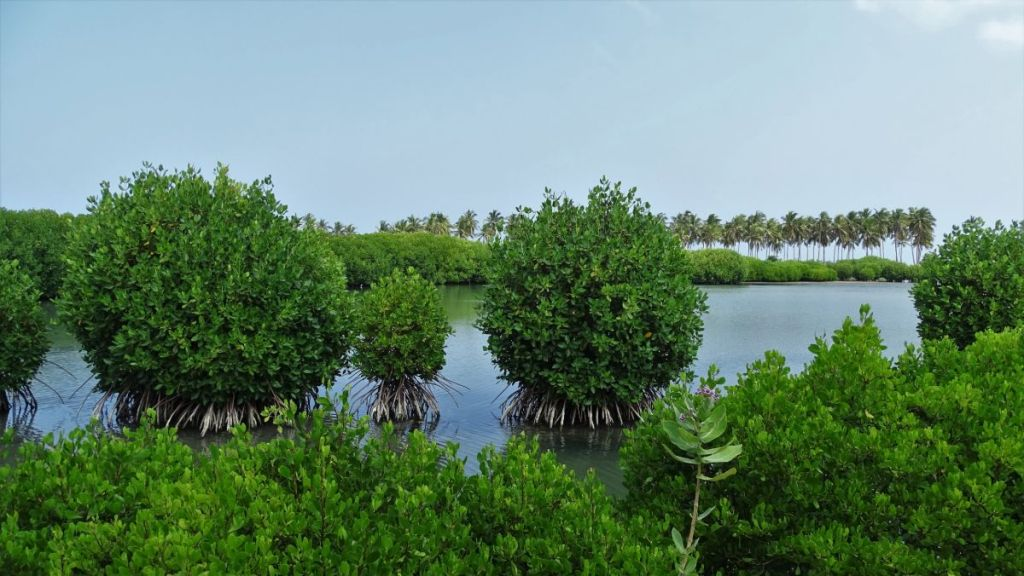 A salt-water lagoon with mangrove bushes and palms lining the beach in the distance