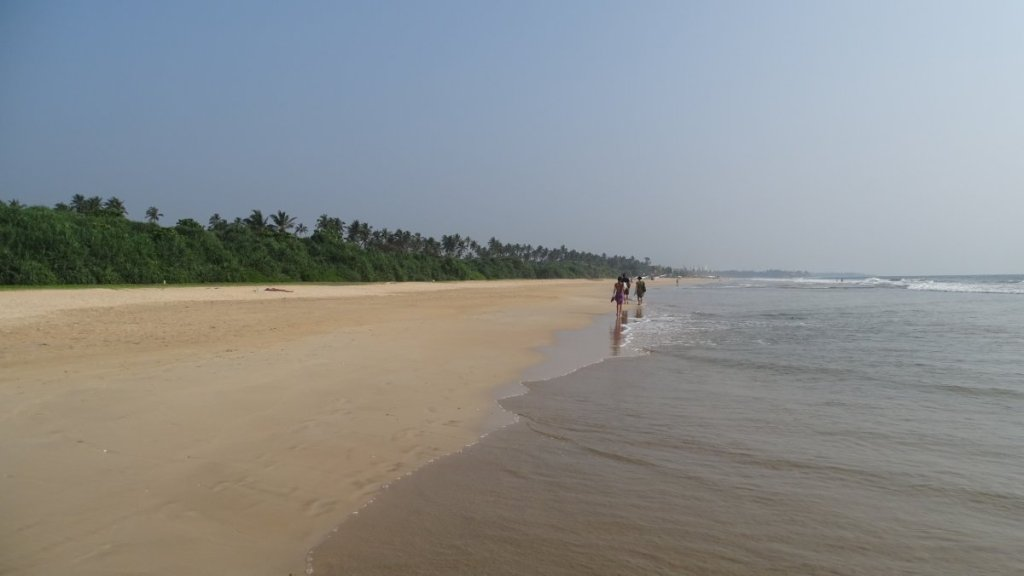 A few tourists on a very long, sandy beach lined with coconut trees in Bentota