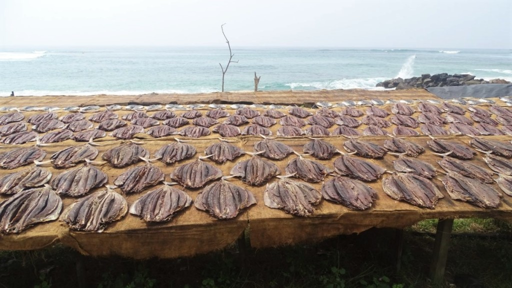 Rows of fish dries in the sun spread on simple scaffolding next to Midigama beach in Sri Lanka