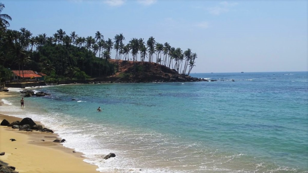 A sandy beach with a few rocks, turquoise sea and a characteristic red-soil peninsula covered wit slender coconut palms in Mirissa