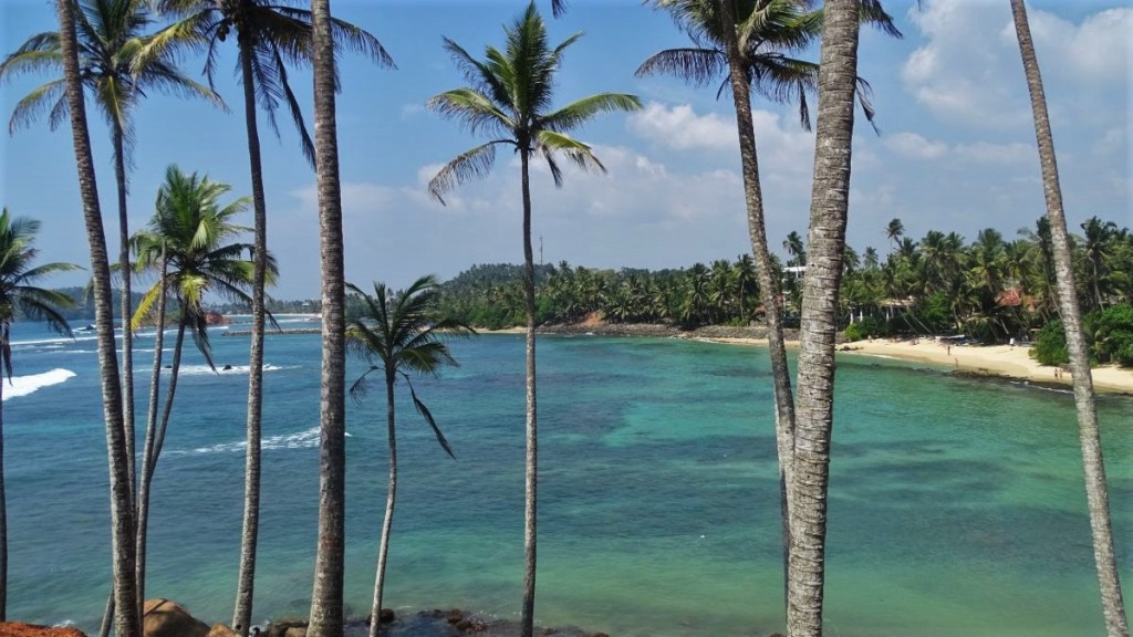 Turtle Bay with its reef, white sand beach and coconut palms seen through the slender palms on the Coconut Tree Hill in Mirissa
