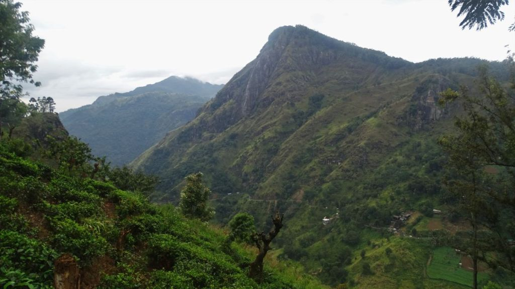View at the tea gardens and rocky mountains covered with greenery on the way to Little Adam's Peak in Ella