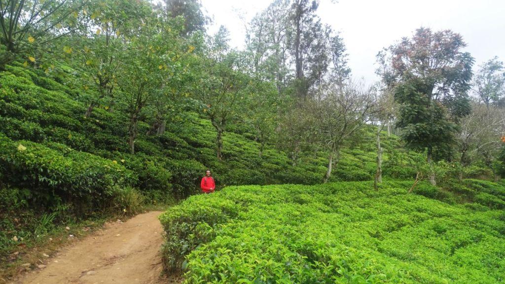 Sayak on the path through a tea garden in Ella