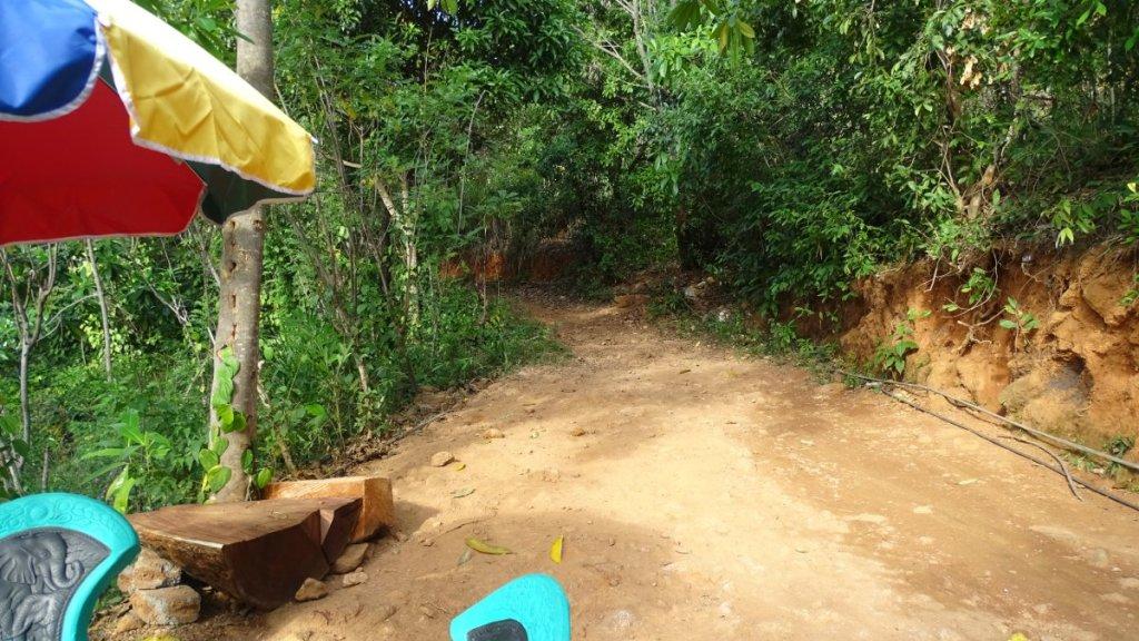 A path through the forest towards the top of Diyaluma Falls