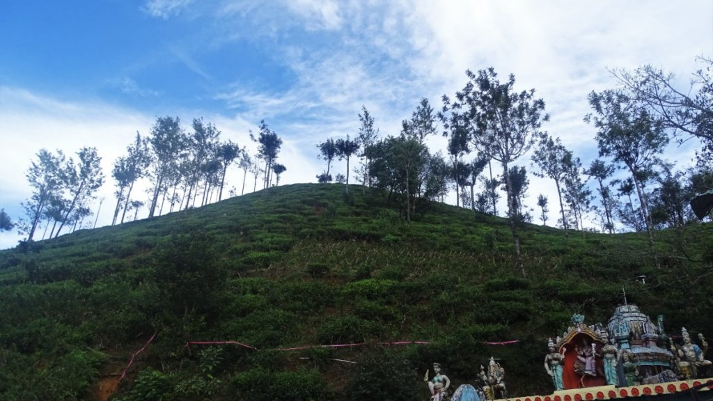 A hill covered with tea gardens and a top of the roof of a Hindu temple covered with sculptures of gods