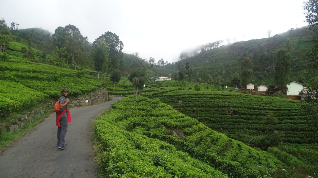 Sayak walks up a very narrow, aphalt road leading up the Lipton's Seat among tea gardens of Dambetanne Estate