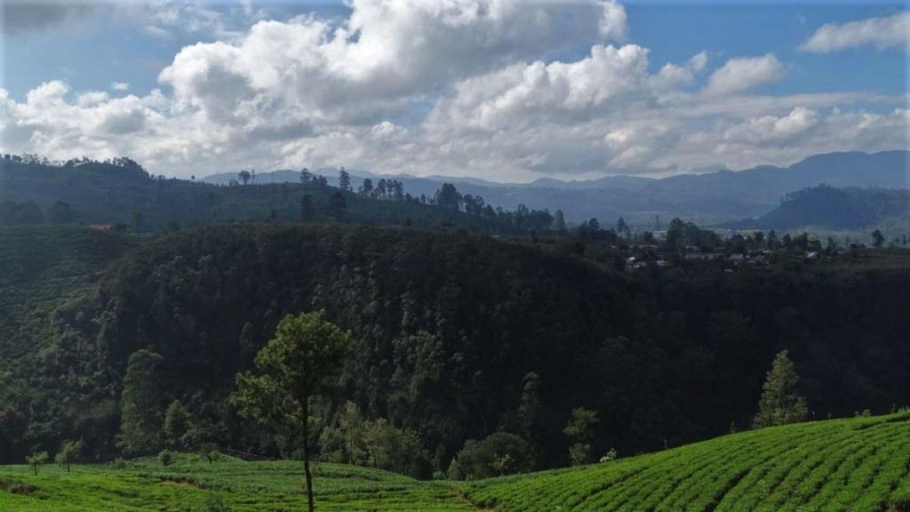 A slope covered with tea gardens, more green hills in the background and high mountain range far in the horizons in the Sri Lankan Tea Country