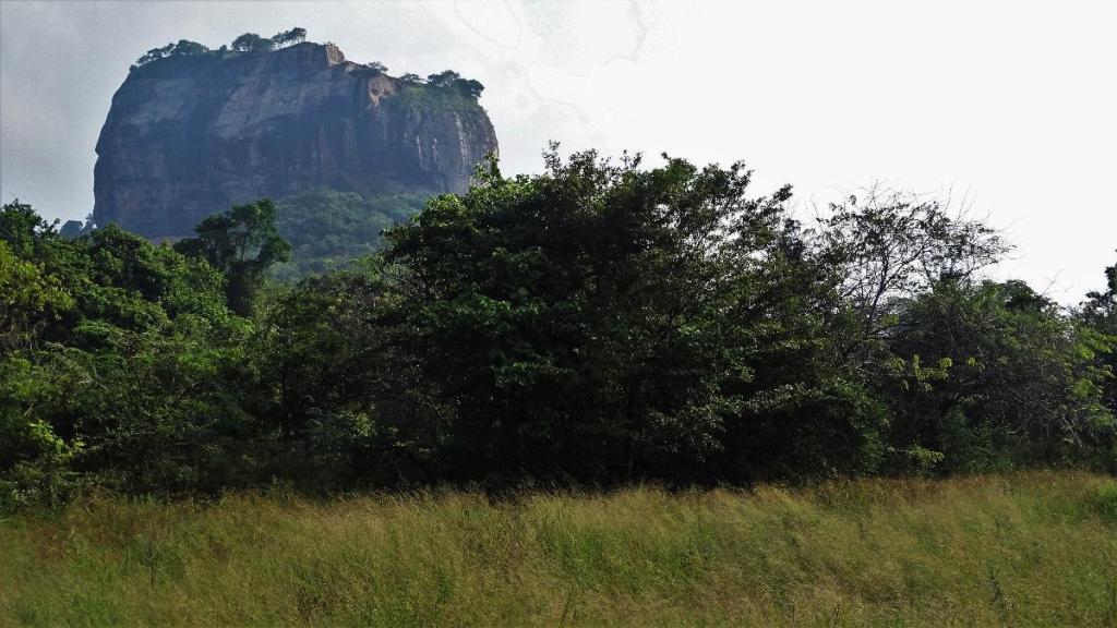 Vertical walls of Sigiriya rock rising from the grassland