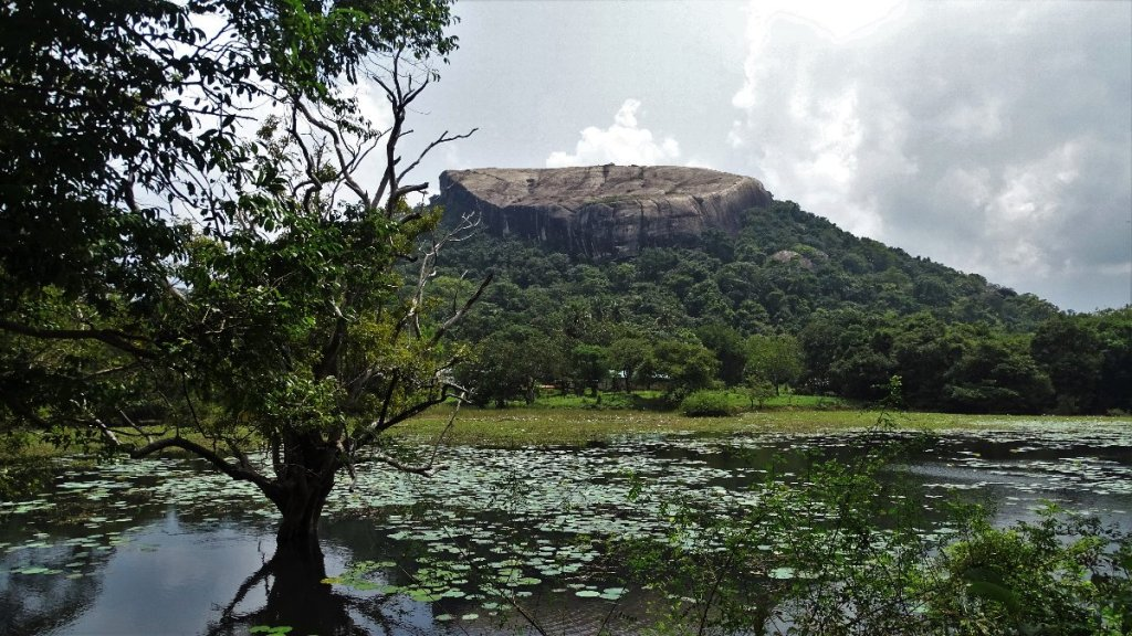 A flat top of Pidurangala rock seen across a pond with water lillies