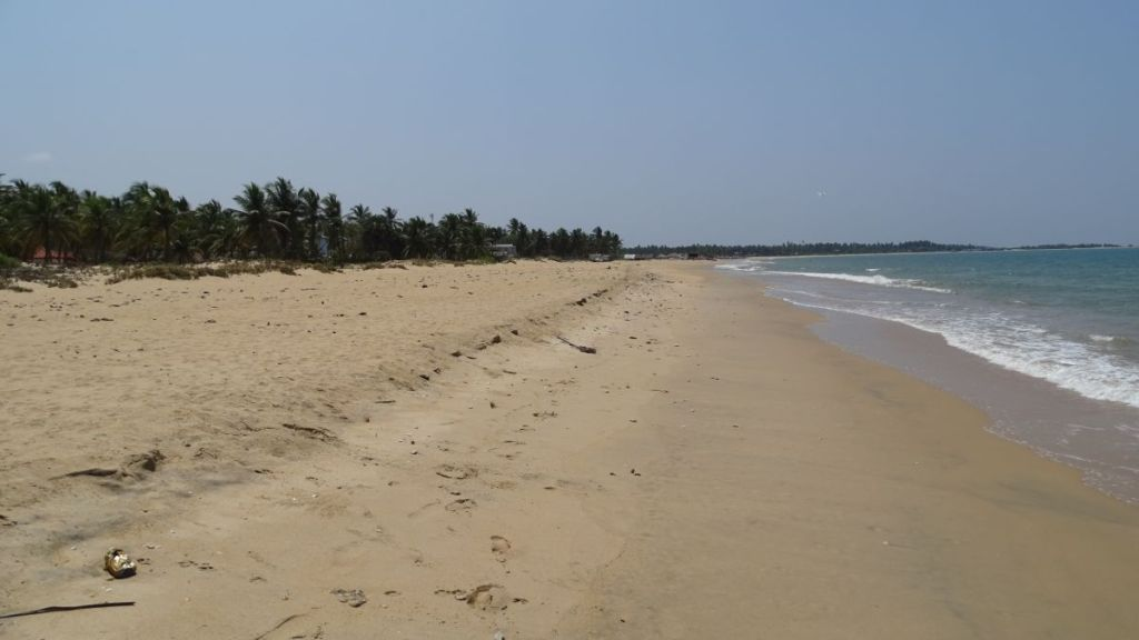 A long, empty stretch of sandy beach lined with coconut palms