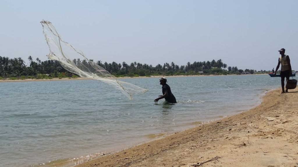 A Sri Lankan fisherman immersed waist-deep in water shouts as he throws in the air a net