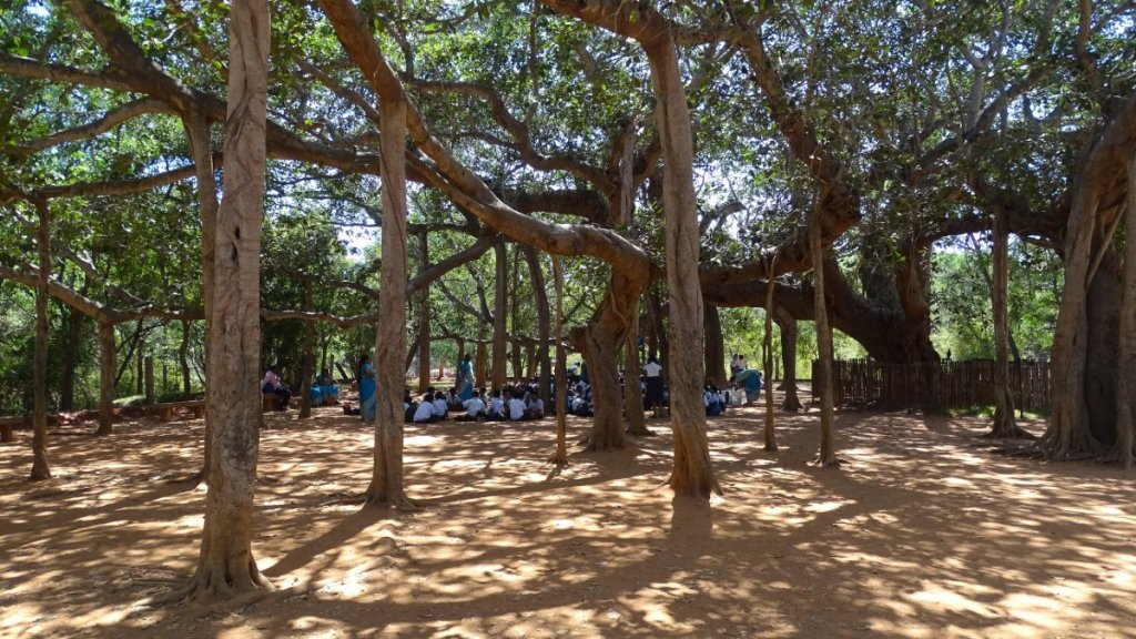 A group of Indian children have a class sitting on the ground in the shade of a giant banyan tree in Auroville