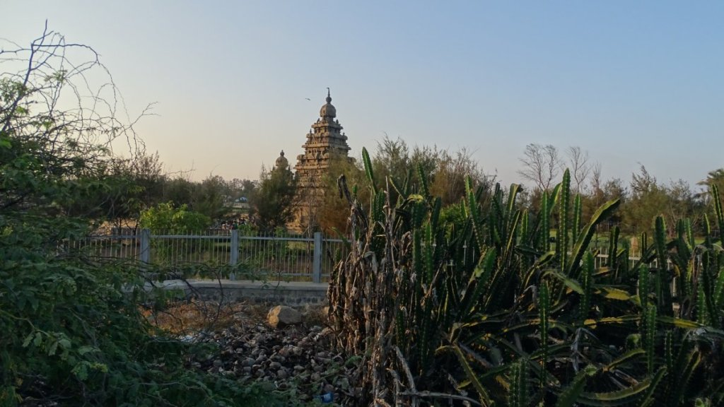 A pyramidal tower of 7th century stone Shore Temple is visible through the fence and cactuses in Mamallapuram