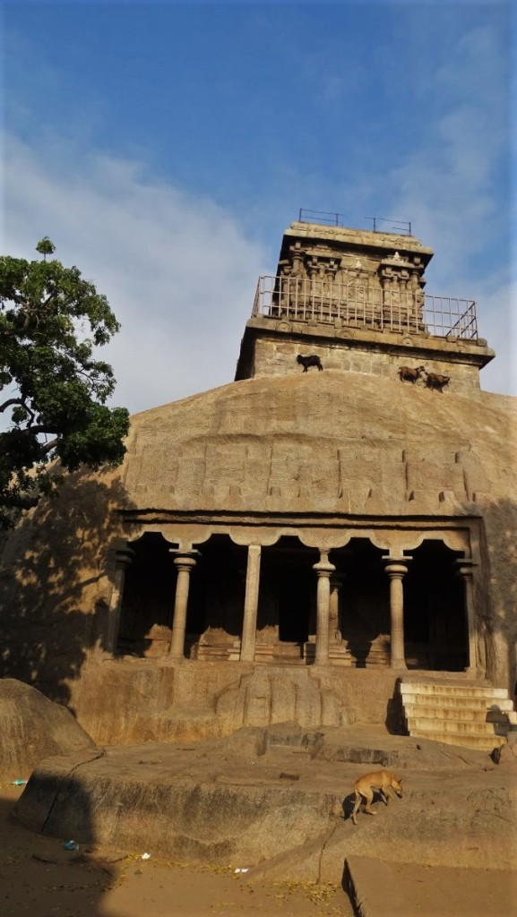 Goats climb on top of a natural rock where a small temple is perched, while a stray dog climbs the stairs to a temple cut in the rock below in Mamallapuram